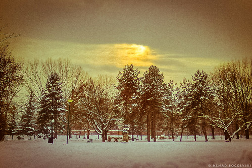 park christmas trees winter wallpaper sun snow poster postcard macedonia card nenad skopje makedonija gradski bogoevski