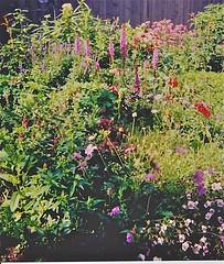 2000 garden