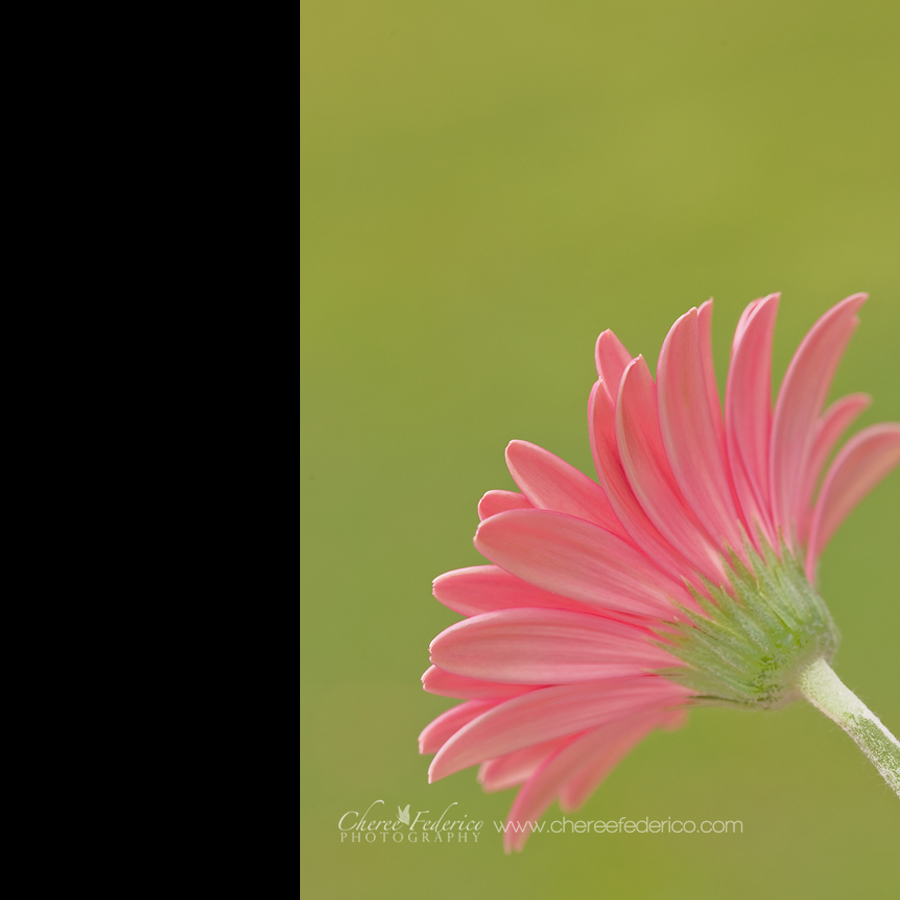 Pink Lemonade Blog
