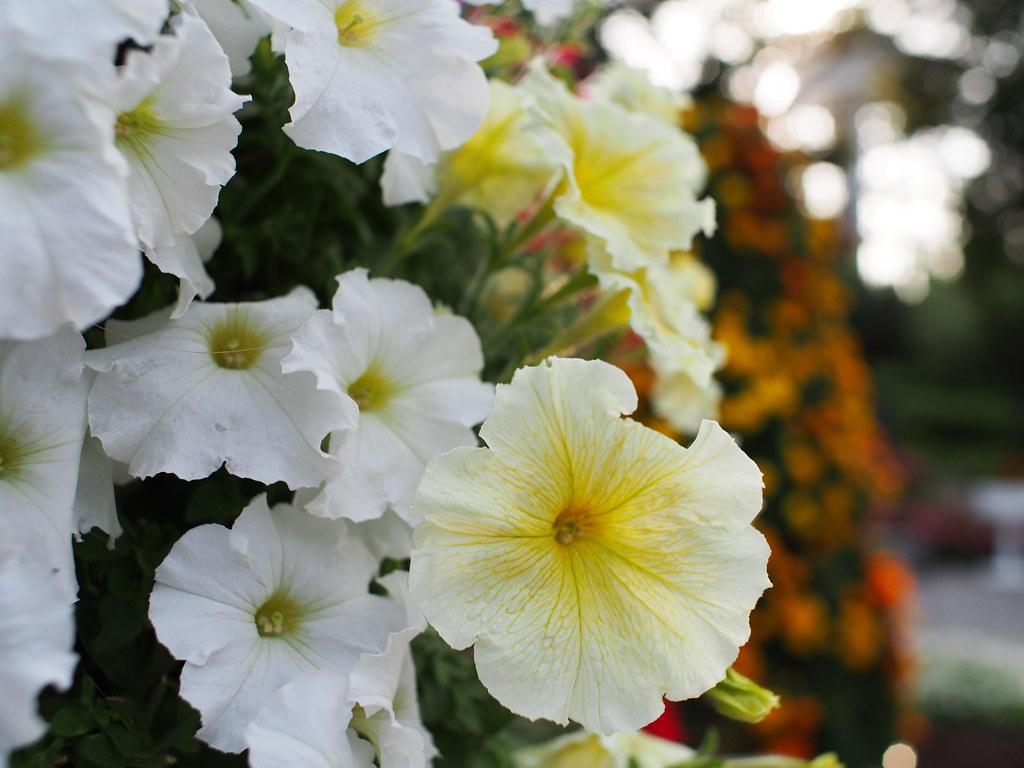 Enoshima Flower Garden