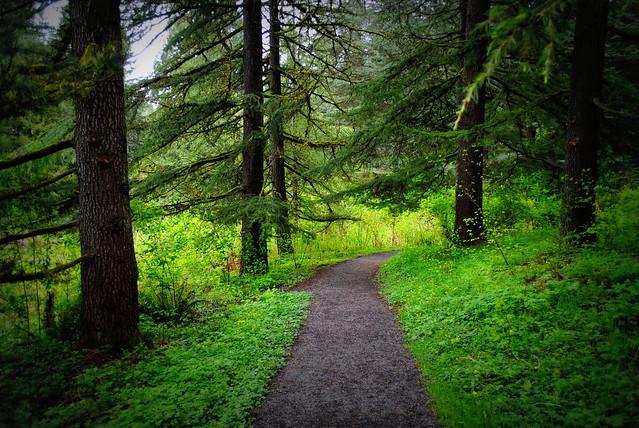 Trail in Hoyt Arboretum