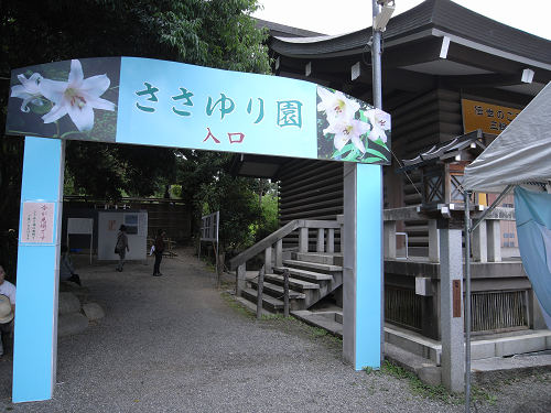 姫神さまが愛した花『ささゆり園』@大神神社(桜井市)