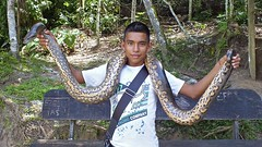 Parque Zoologico y Laguna Quistococha
