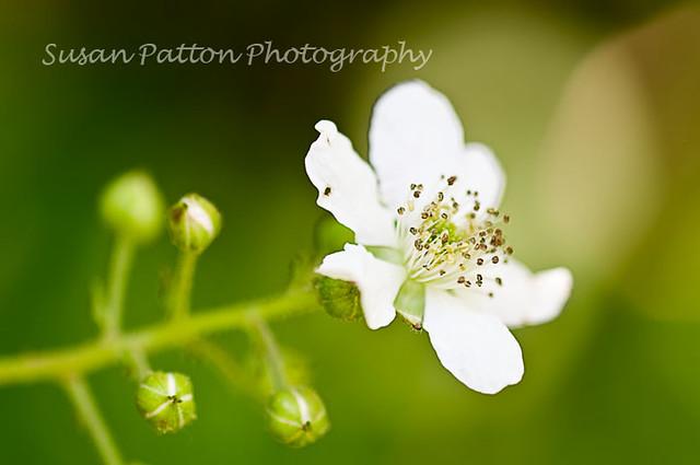 wWhite_flower
