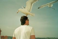 Sea Gull Man