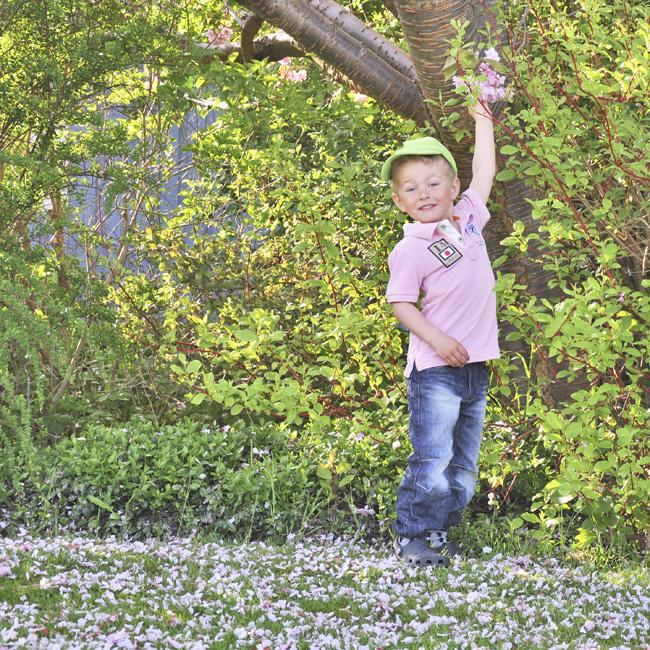 nilse under körsbärsträd