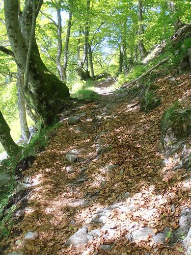 LA MATURE (chemin) 133