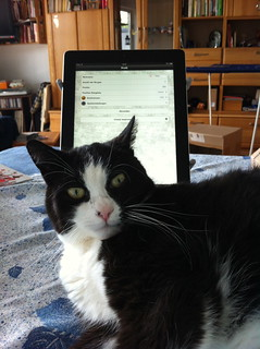 Fiddy and the iPad