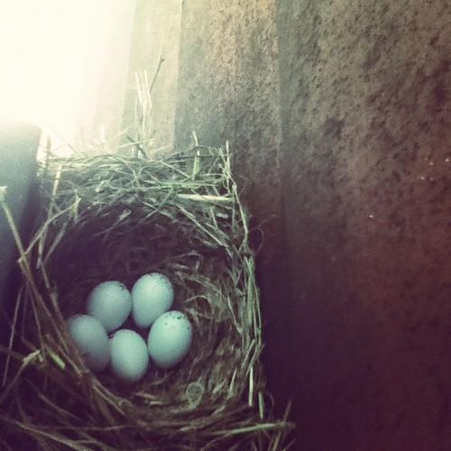 Robin's nest behind my porch light.