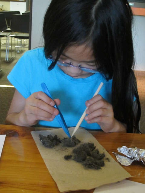 Olivia Dissecting an Owl Pellet