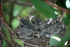 robins May 18, 2012