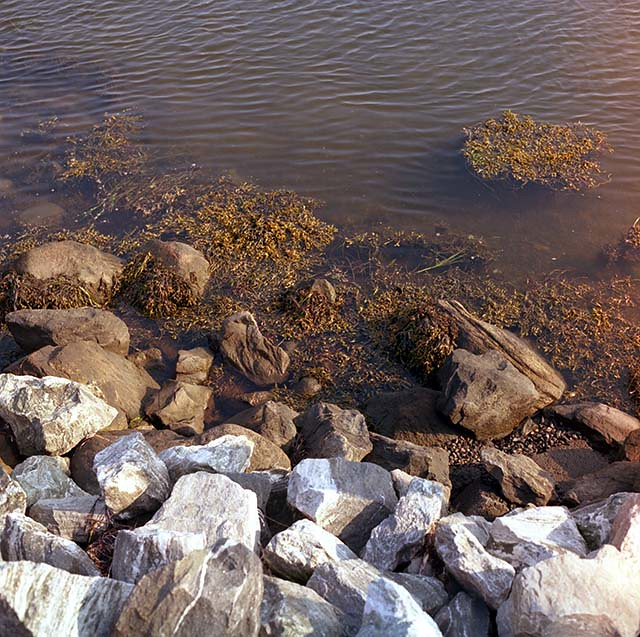 52 weeks in film: rocks algae (Mystic, CT)