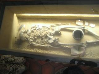 Archealogy museum skeleton