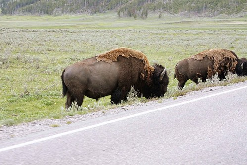 bisonroad2_blog