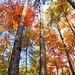 Fall colors by Nitish_Bhardwaj