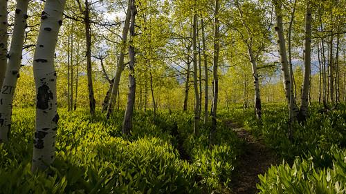 utah hiking uintawasatchcachenationalforest nikond7100 neboloophikes