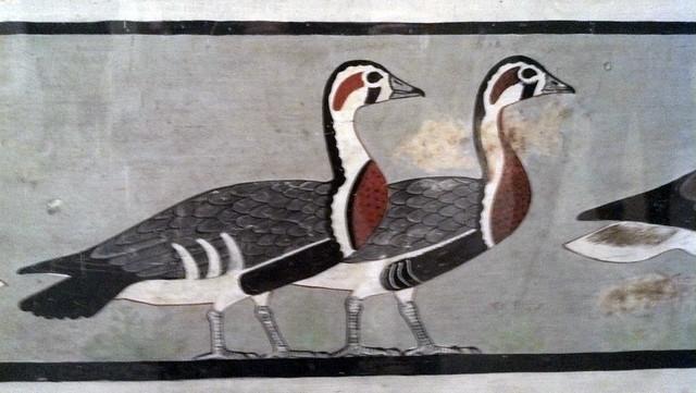 Abusir Geese