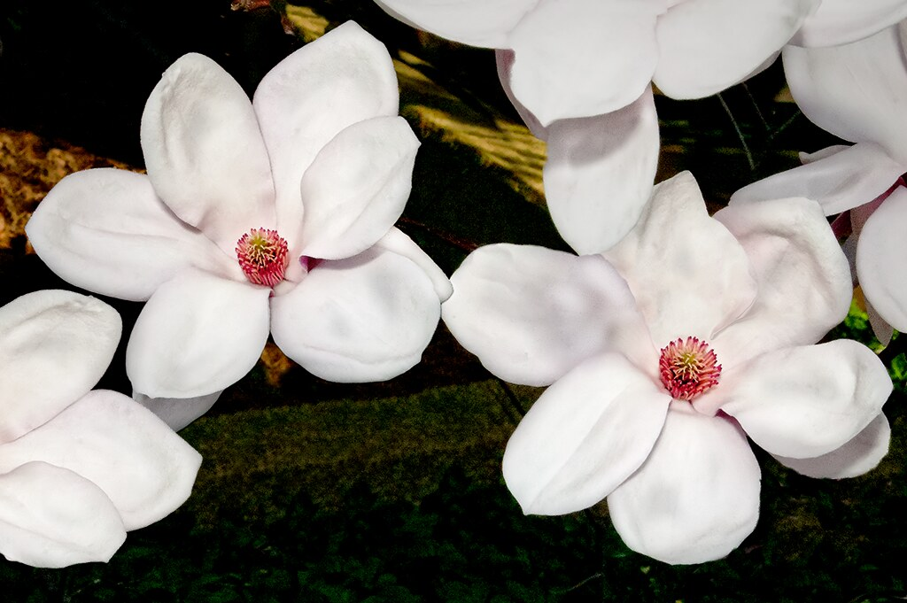 IMAGE: http://farm8.staticflickr.com/7089/7011582301_744a0edfa7_b.jpg
