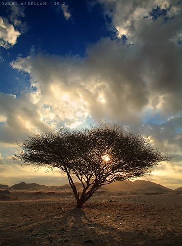 light shadow sky mountains tree nature clouds sunrise landscape sand rocks desert ngc national saudi arabia acacia geographic flickraward flickraward5 flickrawardgallery