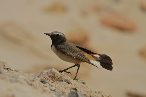 nature birds uae 2012