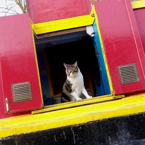 houseboat cat revisited
