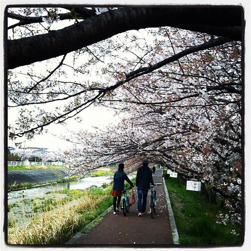 桜のトンネルの中をランニング中です