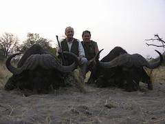 rey de España cazando búfalos