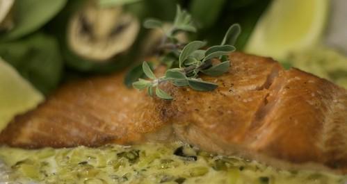 _MG_3734 Salmon w CSF cream sauce and thyme