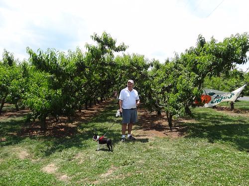 Peach Picking June 2012 (2)