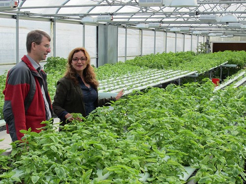 NOP Deputy Administrator Miles McEvoy and co-founder of the Veterans Sustainable Agriculture Training program, Karen Archipley, tour through the Archipleys' organic basil garden.  The garden moved to a hydroponic system when they determined the farm needed to be more sustainable. The switch helped reduce water use by up to 90%, and a loan from the USDA Farm Service Administration helped build a larger greenhouse to triple production.