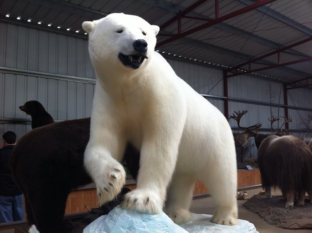 largest polar bear ever stuffed | Flickr - Photo Sharing!