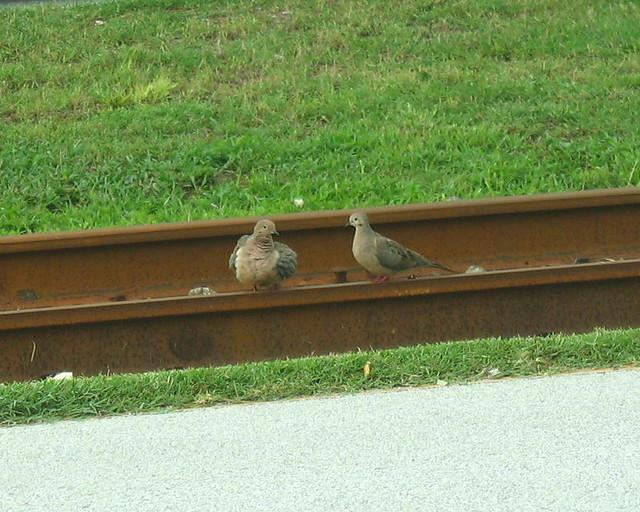 01abcwedraiatrack dove