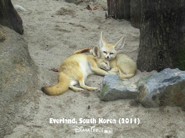 Everland - ZooTopia 09