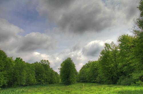 nature greatswamp mygearandme mygearandmepremium ringexcellence