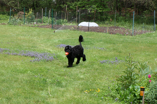skippy by mom and dads garden 009