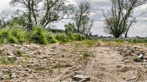 Lammsdorfer Feldweg