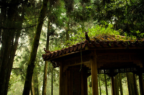 Forests of Alishan-11