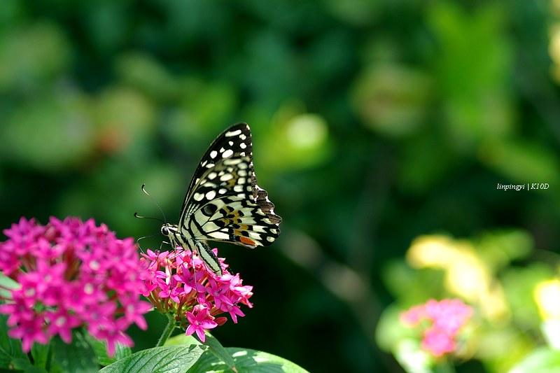 [K10D、F70-210] 一隻蝴蝶,幾多角度。