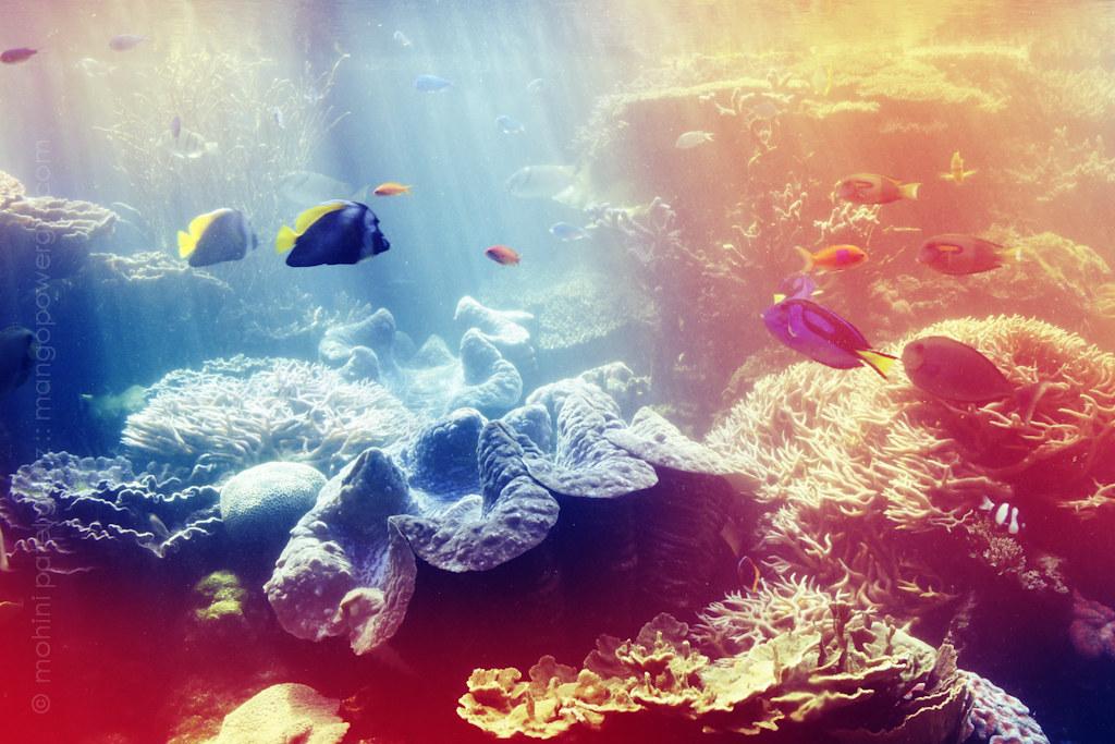 waikiki aquarium - 2