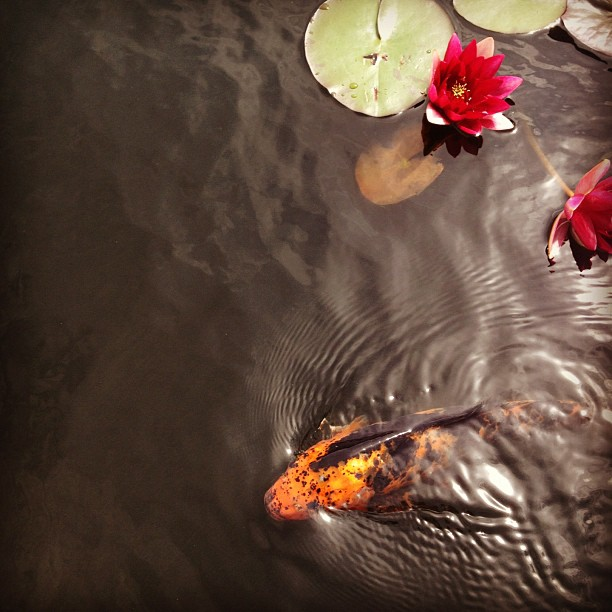 Monet's Garden @nybg