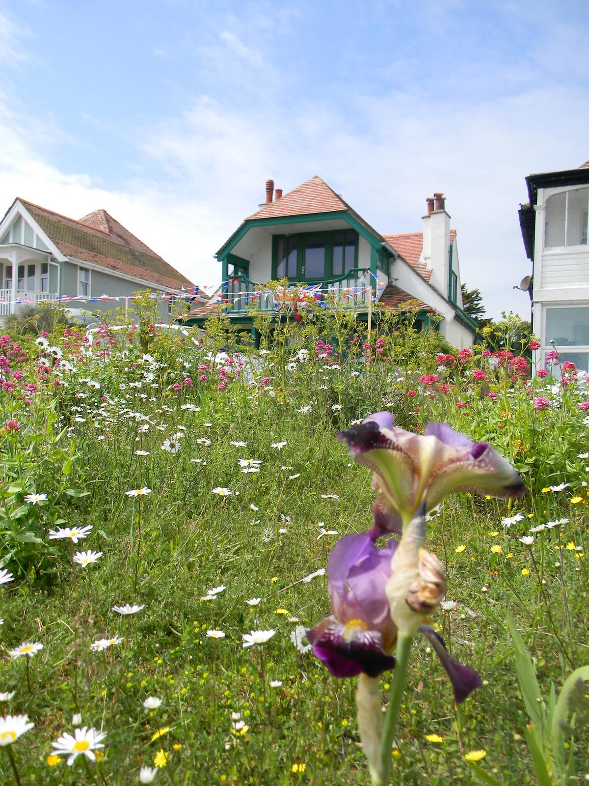 Iris, Deal Beach Deal to Dover