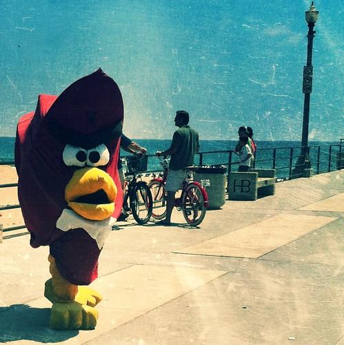 angry bird on the beach