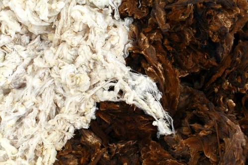Lavar a lã