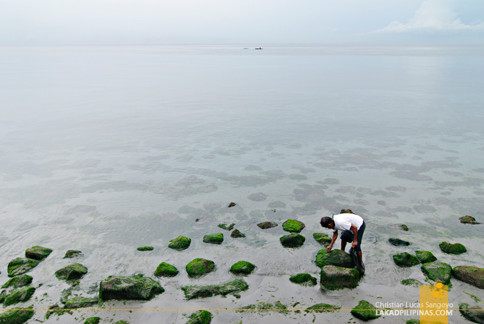 A Local Picking Weeds at Dumaguete Boulevard