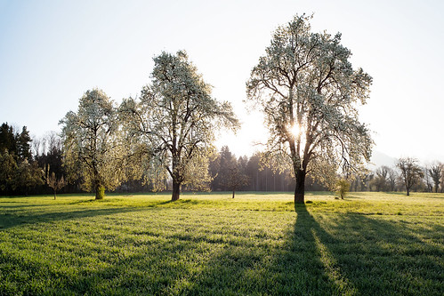 sun tree nature zeiss sunrise austria österreich spring rankweil ze vorarlberg distagont2821
