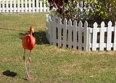 Marching Flamingoes Show