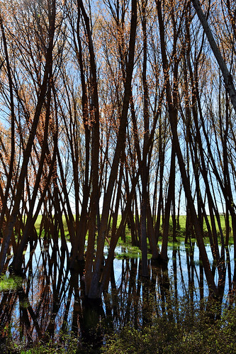 Vertical, Backlight composition, Wetland, Campos branch, The Canal of Castile, Valladolid, Spain