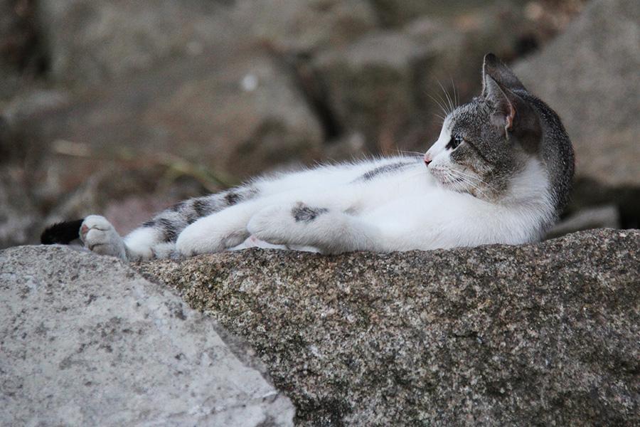 Söpö kissakuva