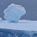 Snow Petrels and Antarctic petrels with iceberg, Scotia Sea, 3 Feb 2016