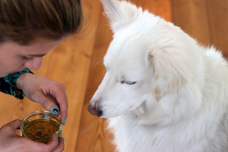 Der beste Nudelsalat Hund (1)